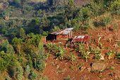 African Shanty Farm