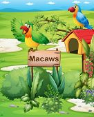 Illustration of the two colorful parrots above a signboard and a pethouse
