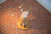 stock photo of deer rack  - A stuffed deer head mounted on a brick wall - JPG