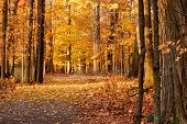 stock photo of backwoods  - Autumn Nature Trail in the northeast state of New York - JPG