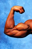 stock photo of weight-lifting  - a photo of a well defined bicep - JPG