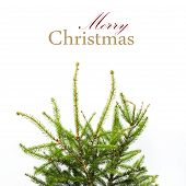 Christmas Card With Home Festive Fir Tree Branches, Not Adorned. Greeting Holiday Card, Merry Christ