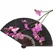 stock photo of semi-circle  - Beauty Black Japanese Paper Fan Surface with Fresh Flower Orchid Isolated on white background - JPG