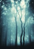 stock photo of midnight  - Mysterious trees in a forest with fog - JPG