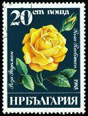 Vintage  Postage Stamp. Rosa  Radiman.
