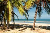 Dolphin Bay, Thailand