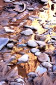 Muddy River Rocks