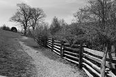 Fence Line a Country Lane on the