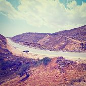 pic of samaria  - Meandering Road in Hills of Samaria Photo Filter - JPG