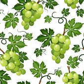 foto of tendril  - Vector seamless background with green grape vines on a white background - JPG