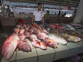 KOTA KINABALU, MALAYSIA - MAY 12 2014: Fish market with reef fish for sale. Image demonstrates envir