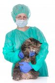 Veterinary Caring Of A Persian Cat