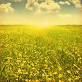 Field of spring flowers, blue sky with clouds and sun. Grunge image.