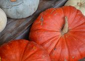 Pumpkins of different colors.