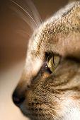 profile head of a cat