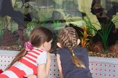 Girls At Aquarium