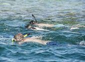 Snorkelers On Tropical Reef