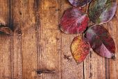 Leaves on brown wooden background