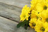 Yellow chrysanthemum on wooden background