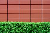 Hedges And Brown Tiled Wall