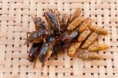 Crispy fried insects on basketwork background