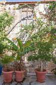 Potted Plants in the Street of Rethymno
