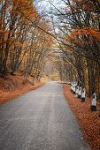 Road In A Red Autumn Forest