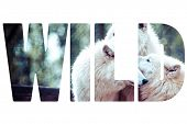 Word Wild Arctic White Wolf