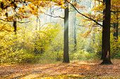 Sunlight Lit Glade In Autumn Forest