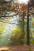 Sun Light Lit Lawn In Autumn Forest