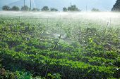 Watering crops by sprinkler irrigation on a farm land