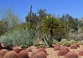 stock photo of century plant  - Formal Desert Cactus Garden in Phoenix - JPG