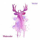 picture of deer head  - Watercolor deer head Vector on the white background - JPG