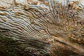 Corroded Tree