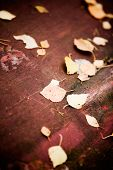 Red background texture with fallen autumn leaves
