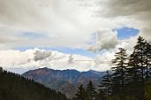 stock photo of himachal pradesh  - Trees with mountain range in the background - JPG