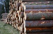 stock photo of bohemia  - felled trees ready for transportation South Bohemia Czech Republic - JPG