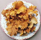 Chanterelles On Plate