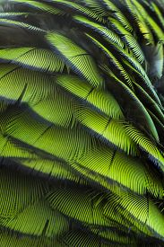 foto of green-winged macaw  - Green bird plumage Harlequin Macaw feathers nature texture background - JPG
