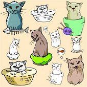 Vector illustrations of cats in color, and black and white renderings.