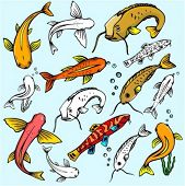 A set of 7 sheat-fish and goldfish vector illustrations in color, and black and white renderings.