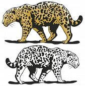 Vector illustration of a leopard.