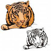 Vector illustration of a tiger.