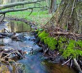 Small Brook Meander