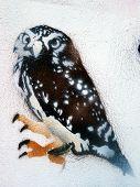 Grafitti Stencil Owl