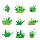 A set of green grass design elements, vector illustration series.