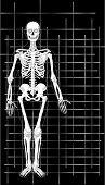 Skeleton Business Card