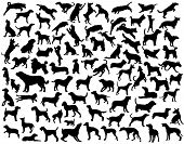 stock photo of alsatian  - Collection of vector silhouettes of various dog breeds and poses - JPG