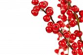stock photo of winterberry  - Winterberry Christmas branches with red holly berries - JPG