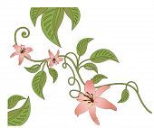 vines and flowers vector